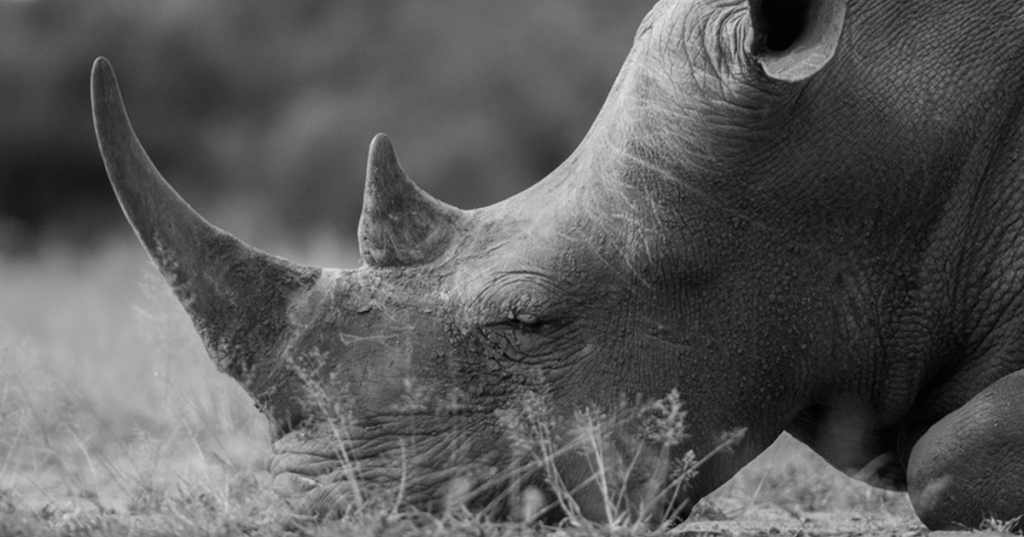 Cutting-edge technology developed by AxxonSoft to target poaching in Southern Africa